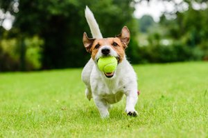 Westin Mission Hills Resort Rancho Mirage
